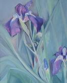 Irises 11x14